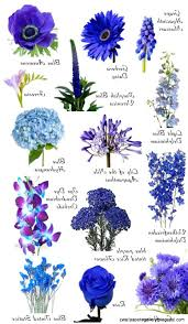 blue flowers blue flowers names names of flowers and images beautiful best