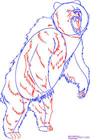 draw grizzly bear step step forest animals animals