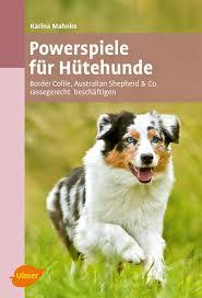 australian shepherd 1 jahr gewicht powerspiele für hütehunde border collie australian shepherd u0026 co