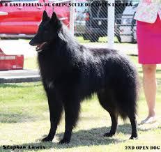 belgian shepherd dog club of canada easy u2013 beljekali