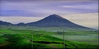 Teh Kayu Aro kayu aro kerinci of paradise kuliner indonesia