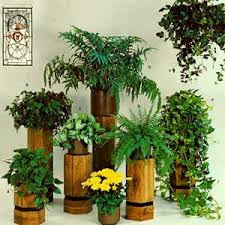 indoor plants india 17 best indoor plants images on pinterest indoor plants indoor