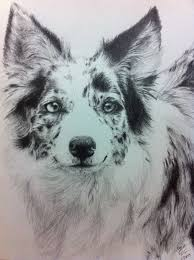 australian shepherd or border collie blue merle border collie australian shepherd by vaporshine on