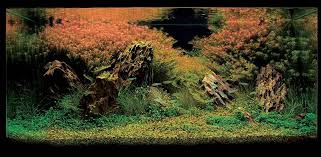 Amano Aquascaping Aquatic Eden Aquascaping Aquarium Blog