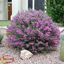 Small Shrubs For Front Yard - best 25 small shrubs ideas on pinterest small flower gardens