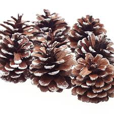 amazon com 8pcs snow pinecone ornaments christmas tree