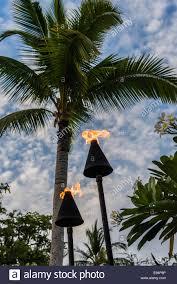 palm tree torch hawaii lighting travel resort evening closeup stock