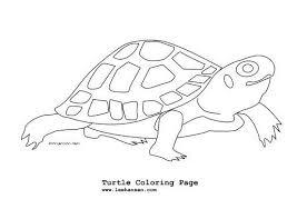 reptiles u0026 amphibians coloring pages hubpages