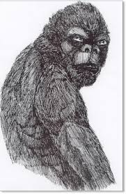 us does bigfoot roam the north country high strangeness