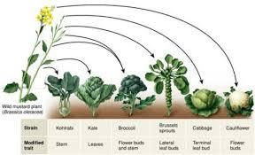 examples of plant evolution quora