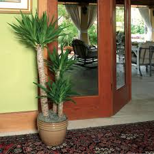 Modern Houseplants by Great Indoor Trees Hgtv