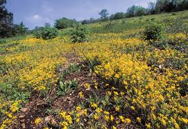 missouri native plant society safeguarding our glades missouri department of conservation