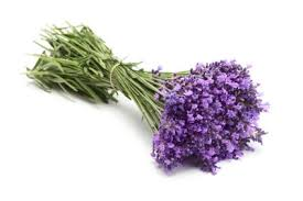 lavender flowers uses of lavender flowers lovetoknow