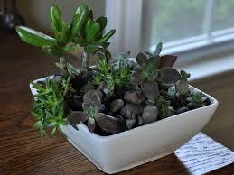 wondrous indoor succulent planter 76 indoor succulent planter
