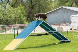 afghan hound agility dog agility equipment u2014 a quick introduction to diy dog agility