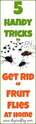 Homemade Fly Trap by The 25 Best Fruit Flies Ideas On Pinterest Fruit Fly Killer