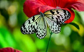 charming butterfly wallpaper images pc download page 17