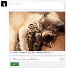 Meme Google Plus - how to make a cute cat meme with google plus ideas and pixels