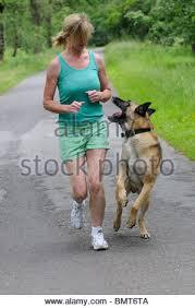 belgian shepherd uk woman with a belgian shepherd dog running along a country road in