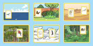 coloring pages of animals in their habitats habitats u0026 environments primary resources habitats page 1
