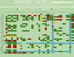 best 25 companion planting guide ideas on pinterest companion