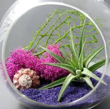 home decoration fabulous terrarium plants inspiration 3 ways of