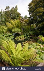 tropical rainforest native plants ferns trees and plants surrounding a pond in the tropical jungle