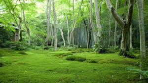 trees grass green forest nature trees free desktop pictures of