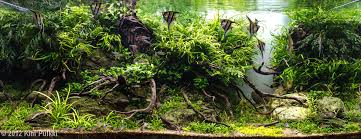 Amano Aquascaping 2012 Aga Aquascaping Contest 250