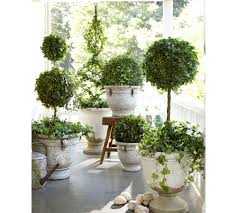 bring spring to your porch with topiaries that u0027s where hedera
