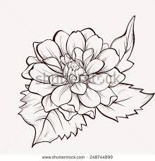 dahlia flower stock images royalty free images u0026 vectors