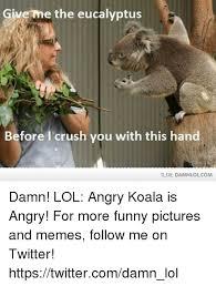 Angry Koala Meme - 25 best memes about angry koala angry koala memes