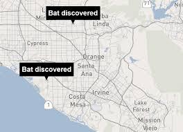 Mesa College Campus Map Second Live Rabid Bat Found Near Schools In O C La Times