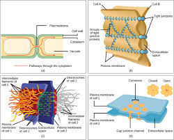 What Organelles Are Found In Epithelial Cells Eukaryotic Cells Biology I