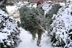proper care will keep christmas tree fresh longer the augusta