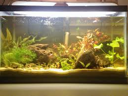 Substrate Aquascape Substrate For Planted Apisto Aquarium Apistogramma Com