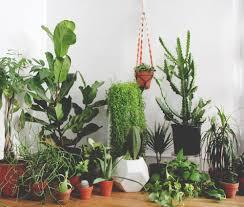 life hack keep your houseplants alive