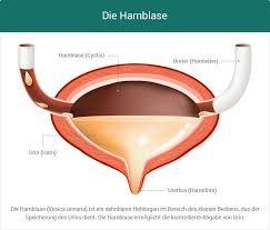 blasenschwäche medikamente ᐅ harninkontinenz blasenschwäche ursachen behandlung
