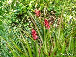 brazil native plants bromeliads eden garden auckland new zealand travel to eat