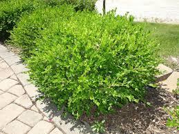 Fake Bushes Fresh Free Large Bushes For Landscaping 16981