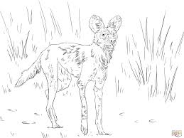 african wild dog or ornate wolf coloring page free printable
