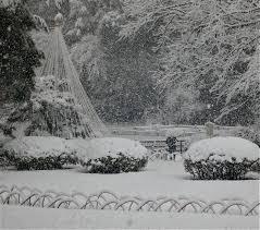 today u0027s special guest winter jonelle patrick u0027s only in japan