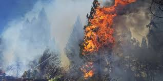 Wildfire In Arizona Kills 19 by We Had 3 Minutes To Save Their Lives U0027