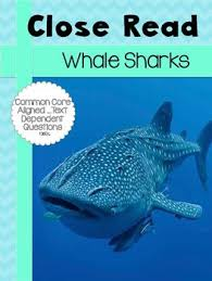 the 25 best interesting facts about sharks ideas on pinterest