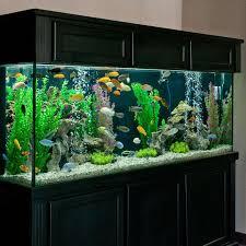 best fan for aquarium 19 best aquarium ideas images on pinterest fish aquariums fish