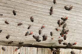 was ist das für ein insekt eine wanze oder was urlaub insekten ältere wanze insekten wanzen stockfoto bild sonnen sonne