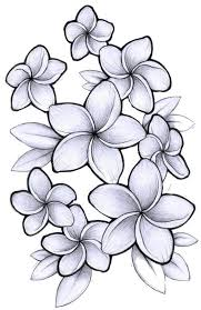 plumeria flower drawing google search flowers pinterest