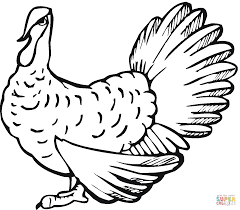 wild turkey coloring page free printable coloring pages