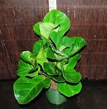 houseplants ebay