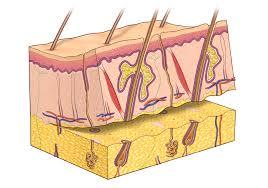 reconstructive surgery bapras